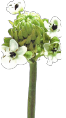 logo van der weegh uitvaartzorg